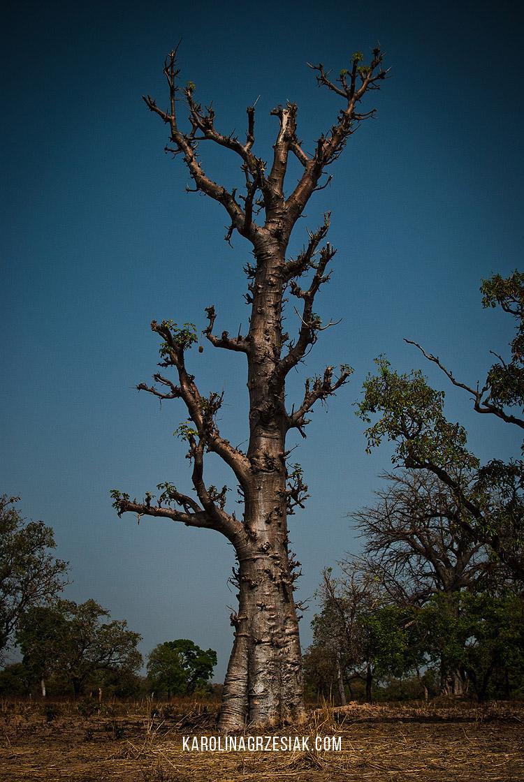 burkina faso africa 12