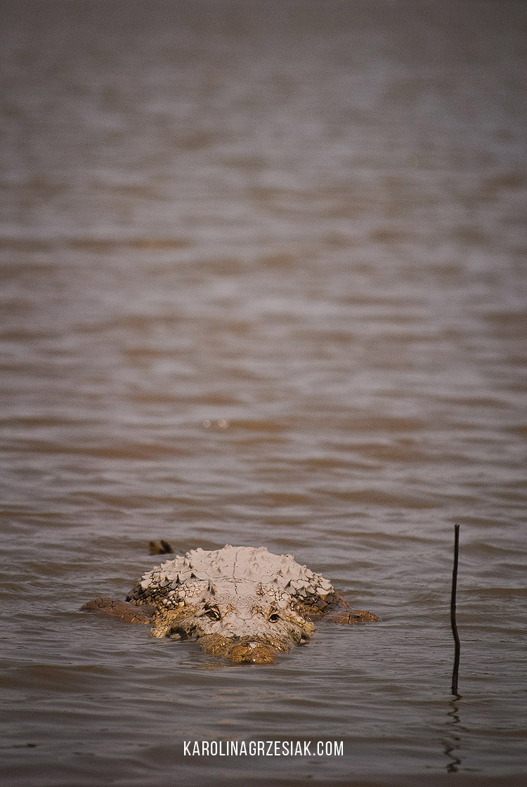 sacred crocodiles sabou 01