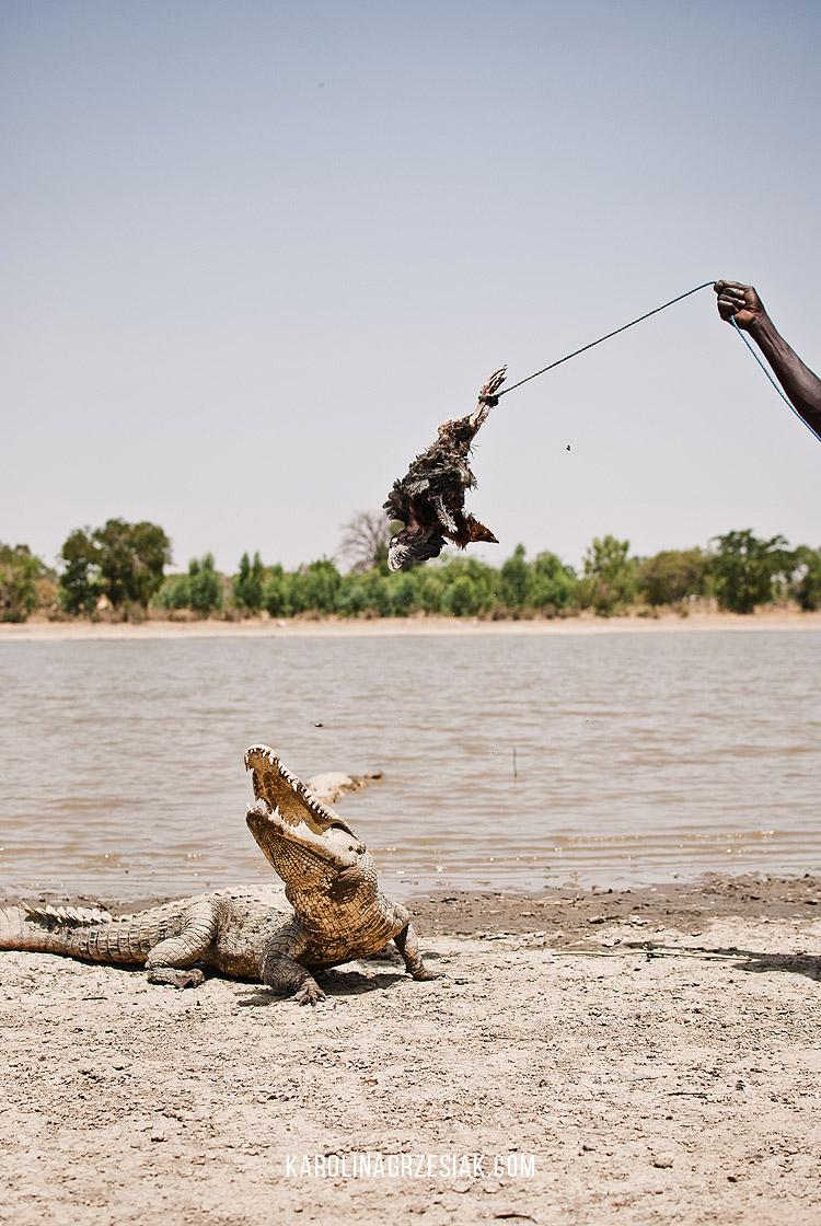 sacred crocodiles sabou 02