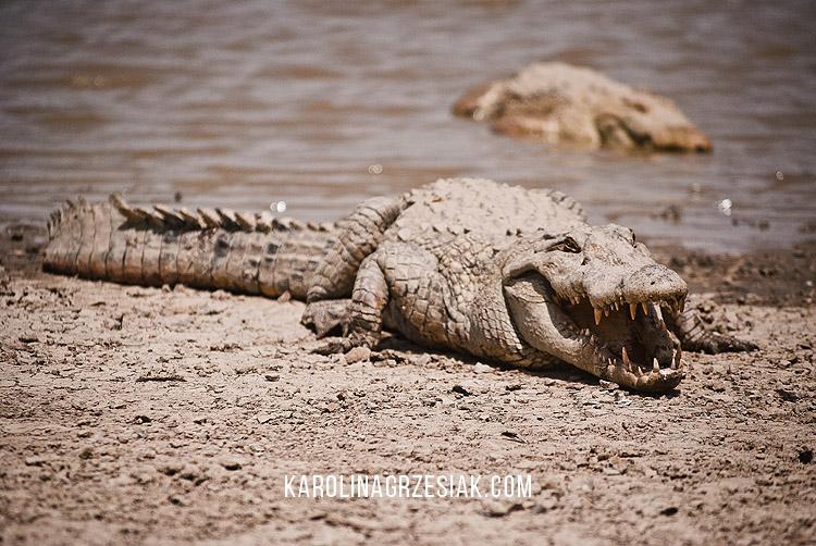 sacred crocodiles sabou 03