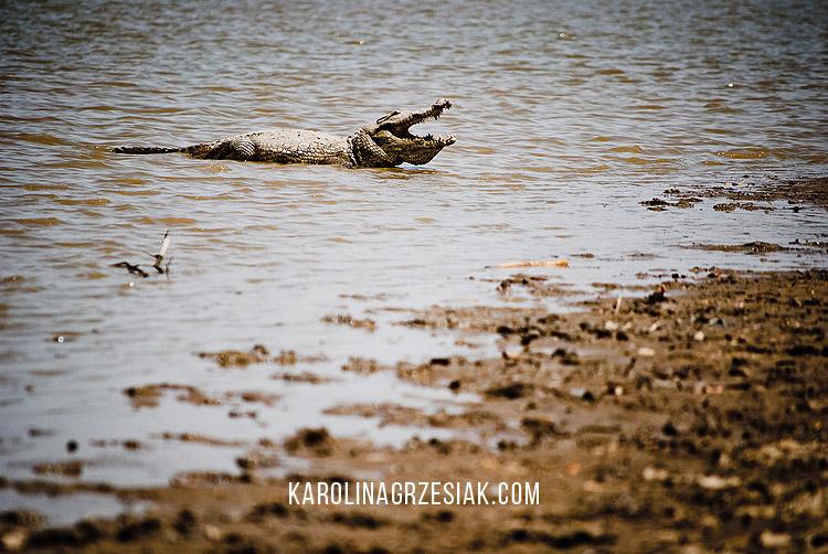 sacred crocodiles sabou 04